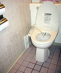 Este chorro de agua limpiaría al usuario de este inodoro con bidet.